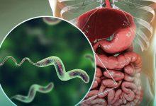 اسهال خونی چیست
